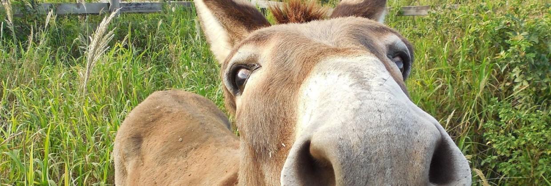 Esel-header
