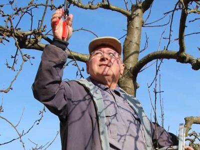 Bruder Anselm bei der Apfelernte.