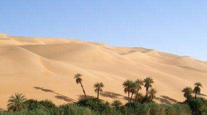 Wüste, Oase. Bild von WikiImages / pixabay.com