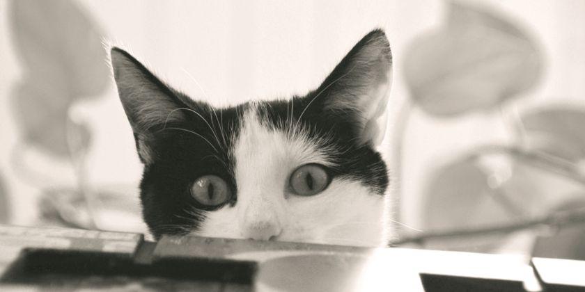 Nähe- oder Distanzbedürfnis einer Katze? Bild von Eledhwen82 / pixelio.de