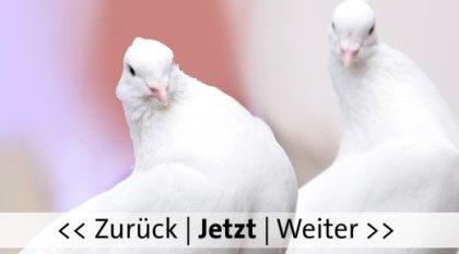 Tauben, Bild von Rothart auf Pixabay